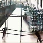 Čtyřnásobný smrtelný pracovní úraz elektrickým proudem