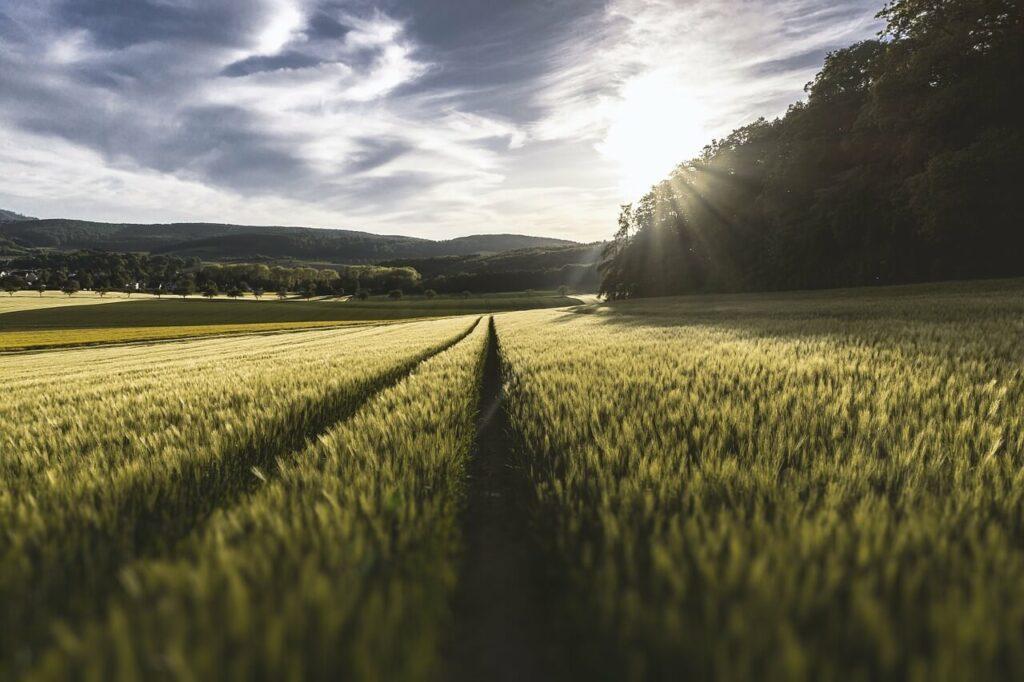 Zemědělci a farmáři
