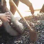 Muže při vykládce nákladního vozidla zasype kamení